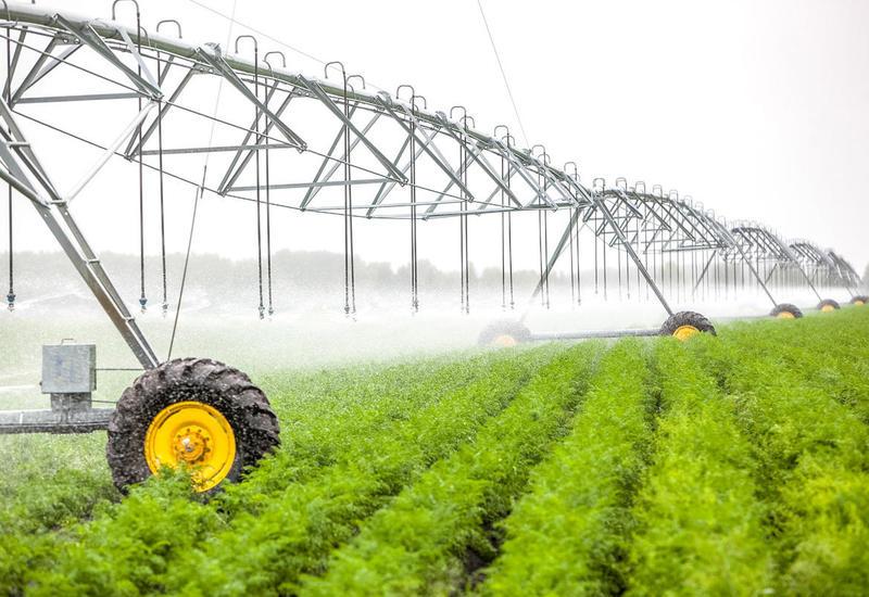 Азербайджан внедряет новую систему субсидирования в аграрной сфере