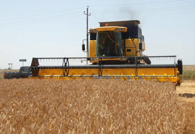 Азербайджан стремительно наращивает производство сельхозпродукции