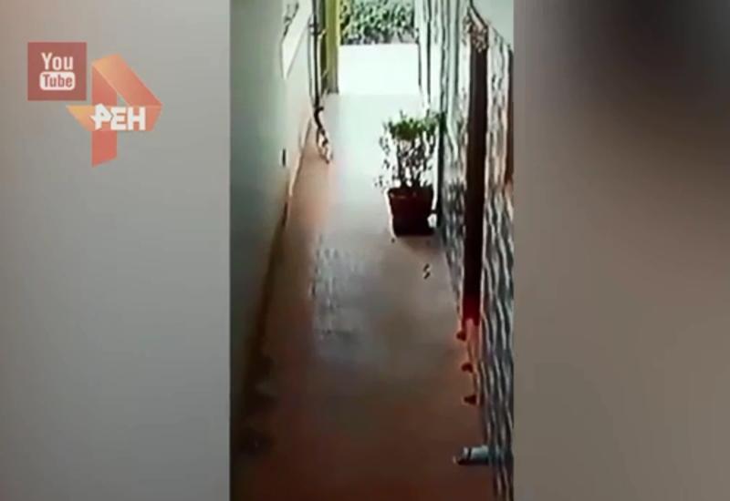 Бесстрашный кот защитил хозяев от кобры