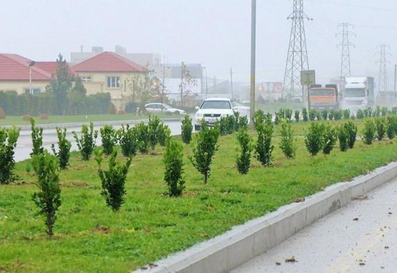 ПЕА и минэкологии презентовали в Баку план совместной деятельности