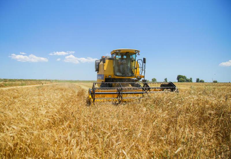 В Азербайджане завершается уборка зерновых