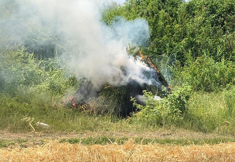Zaqatalada 9 ton narkotik bitki məhv edilib
