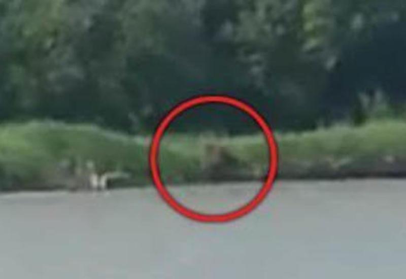 Жуткий получеловек-полузверь пришёл на берег реки на водопой