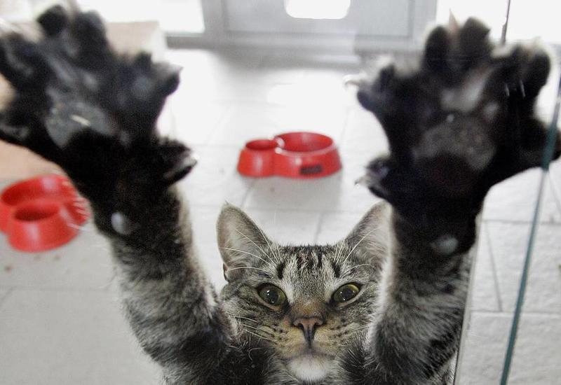 В штате Нью-Йорк запретили удалять кошкам когти