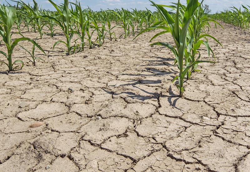 В Индонезии засуха угрожает 50 миллионам жителей