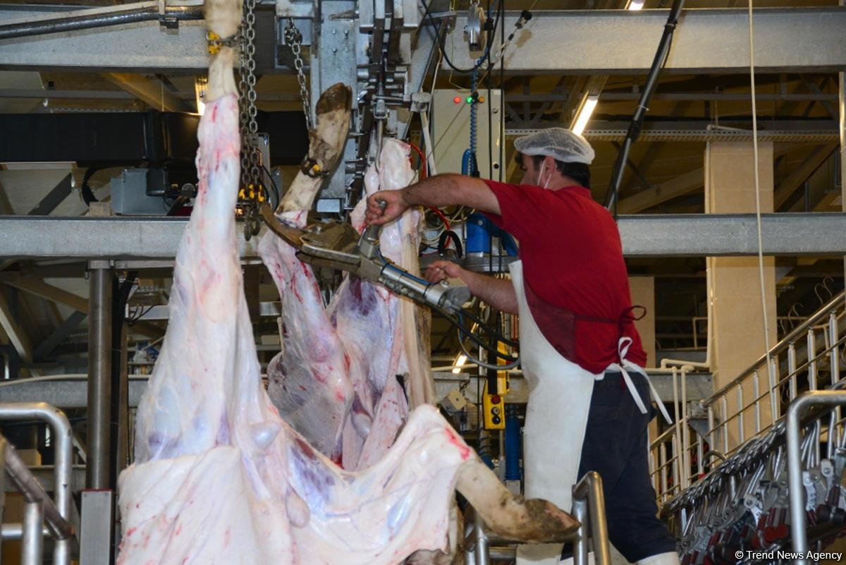 Журналистам показали, как будут работать пункты жертвенного забоя скота