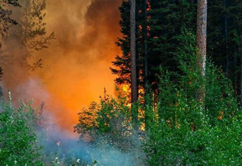 ЕС выделил Греции самолеты для борьбы с лесными пожарами