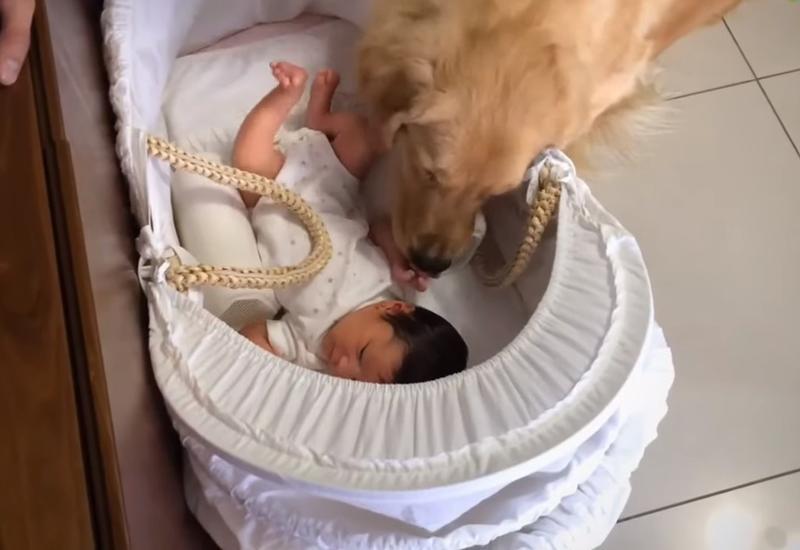 Реакция собаки на появление новорожденной девочки в доме растрогала интернет-пользователей