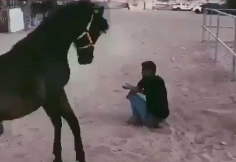 Лошадь-защитница бросилась спасать мужчину и поразила Сеть