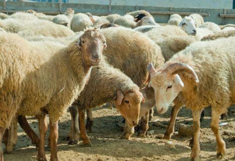 В Азербайджане продезинфицировали пункты продажи и забоя скота