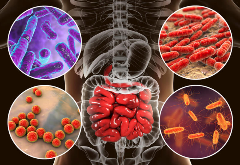 """Ученые заставили кишечных микробов """"жить дружно"""""""
