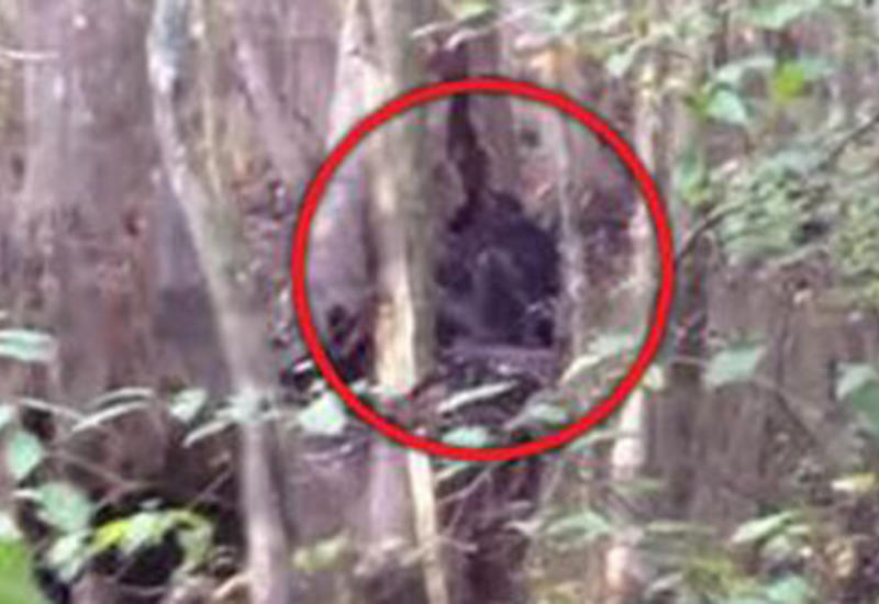 Огромное черное существо в лесу привело очевидца в ужас