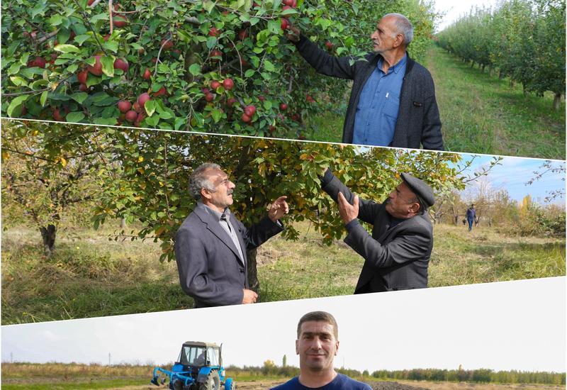 """В рамках проекта """"Социальные сады"""" в Азербайджане создаются фруктовые сады для 250 семей"""