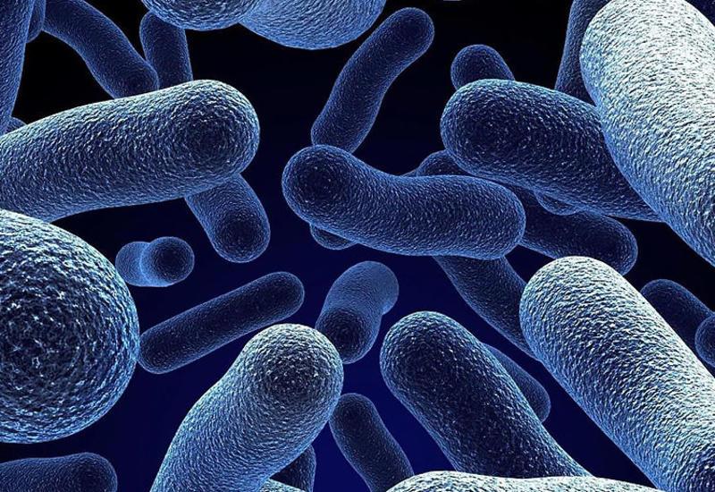 В Испании зафиксировали вспышку листериоза