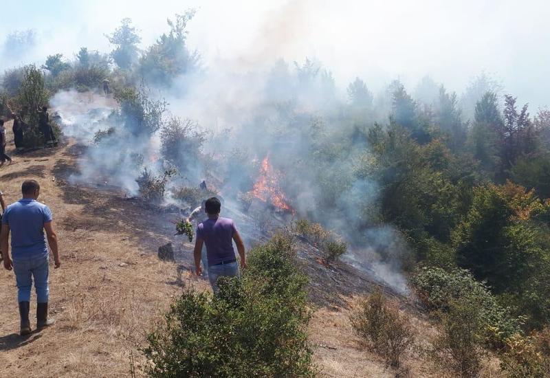 В Азербайджане на территории нацпарка начался пожар