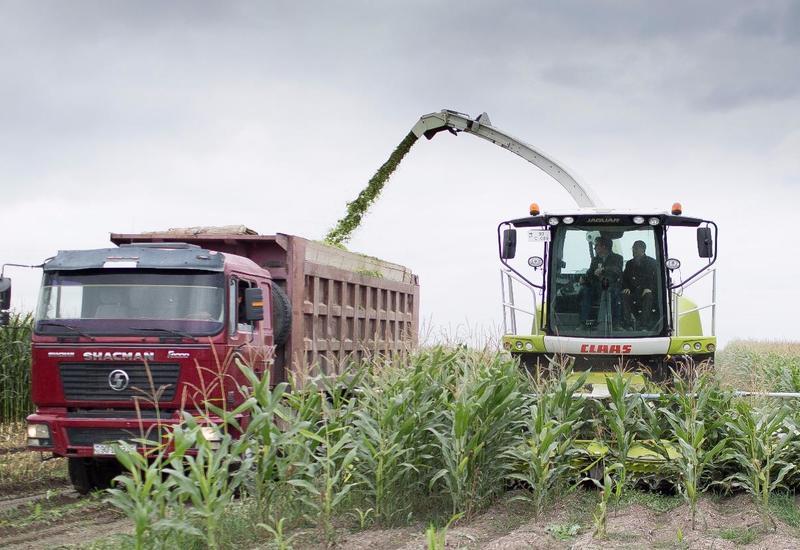 Азербайджан внедряет новый механизм аграрного страхования