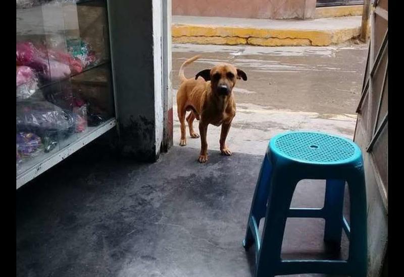 Скитаясь по улицам, измученный пес добрел до полицейского отделения. Дальше случилось чудо