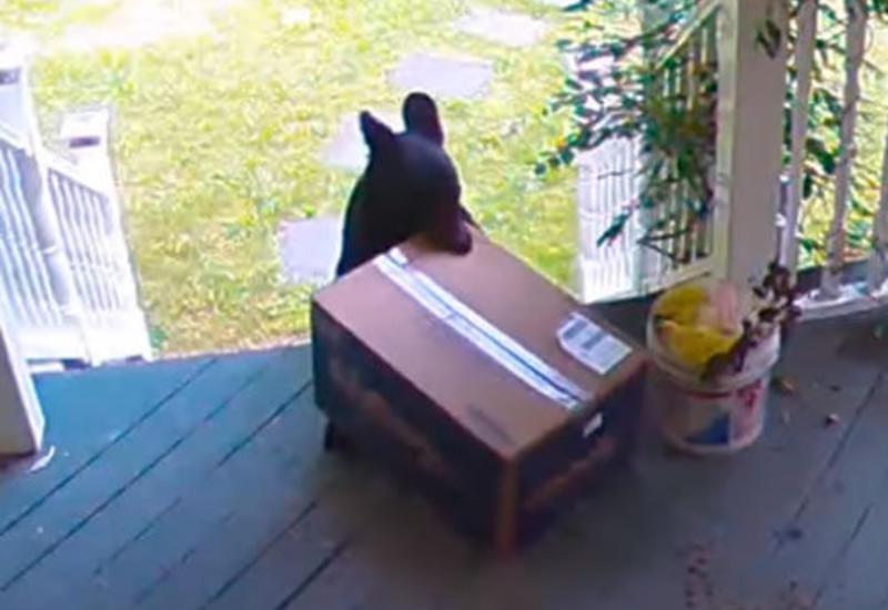В краже посылки с крыльца оказался виноват медведь