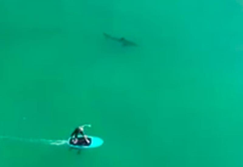 На грани смерти: серферы прокатились с акулами и выжили