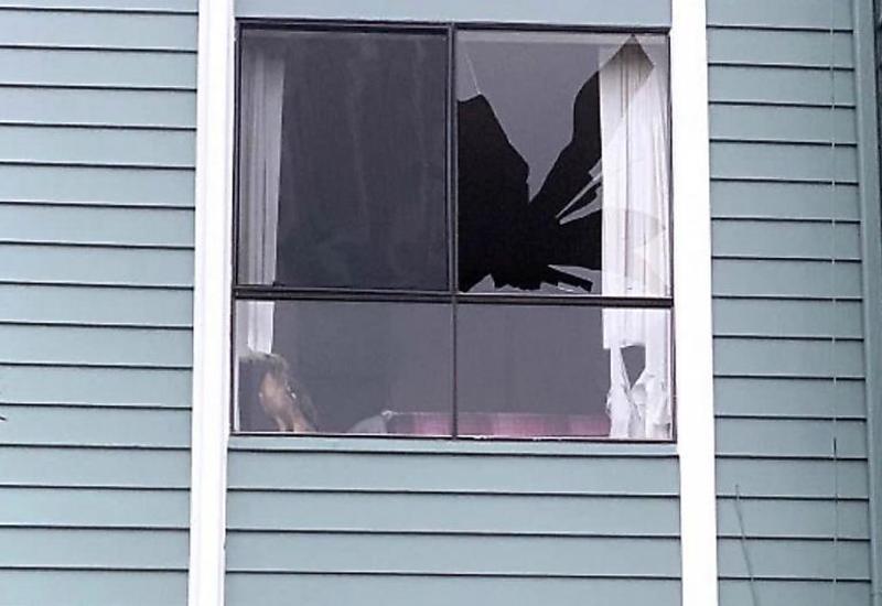 Ястреб, разбив стекло, наведался в квартиру в США