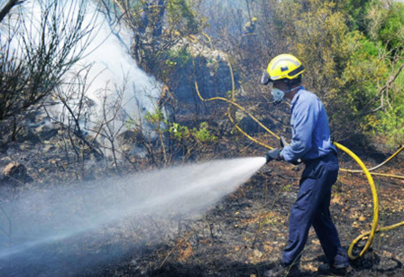Пожар в Гирканском нацпарке полностью потушен