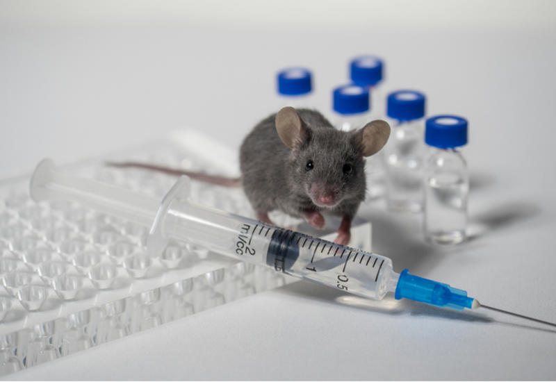 Ученые поняли, почему бесполезно испытывать на мышах антидепрессанты