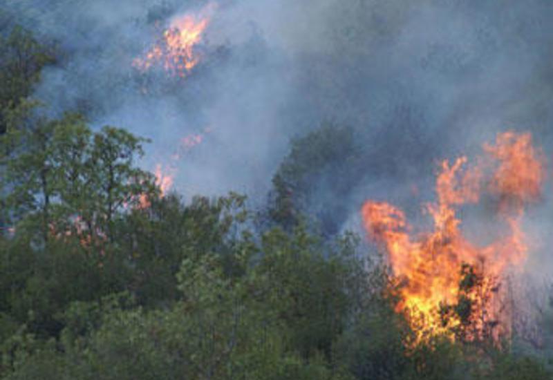 Пожар в горах Огуза, в воздух подняты самолет и вертолеты