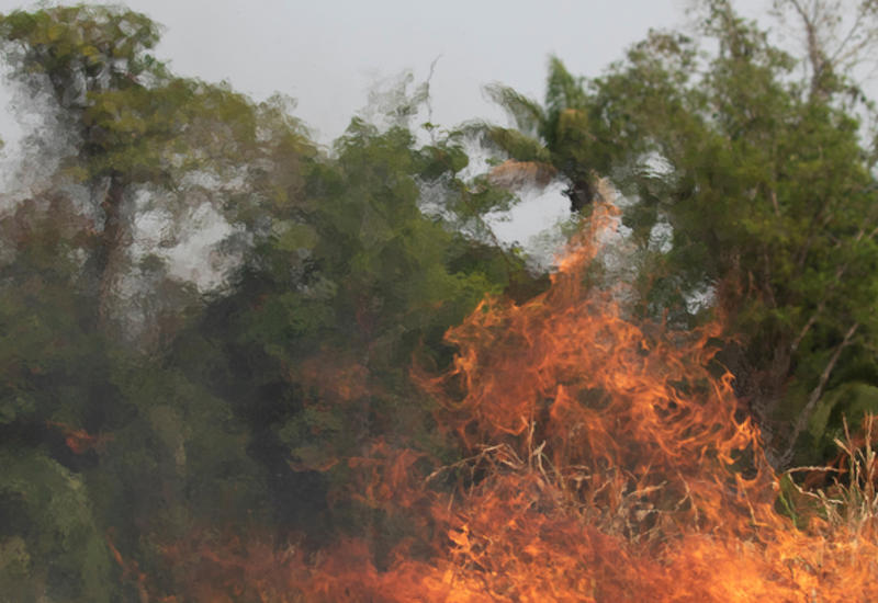 Число пожаров в Бразилии постоянно увеличивается