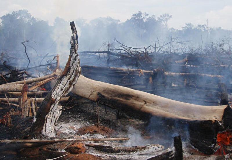 Послов Бразилии отозвали из отпусков из-за ситуации с пожарами в Амазонии