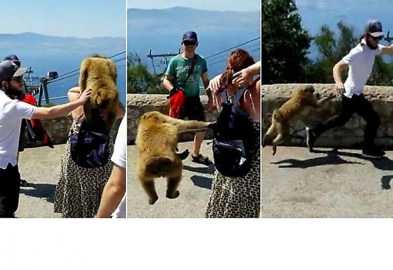 Макаки устроили погоню за туристом, помешавшим им ограбить женщину