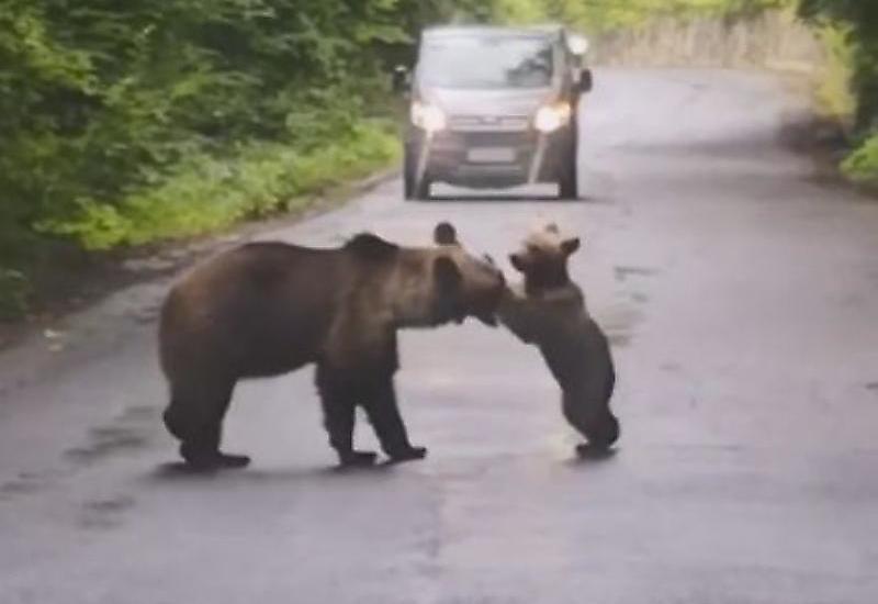 Забавное противостояние между медвежонком и его матерью
