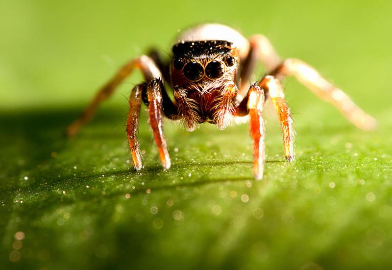 Почему нестоит убивать пауков, живущих вдоме