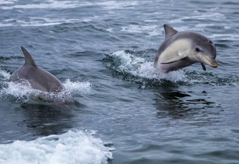 Самка дельфина отблагодарила рыбаков, спасших ее детеныша