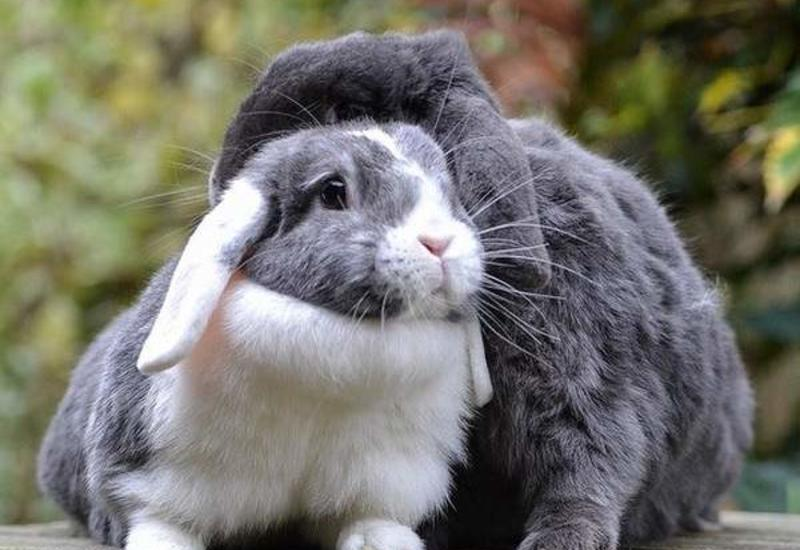 Веганка из Испании «спасла» 16 кроликов и погубила сотню крольчат