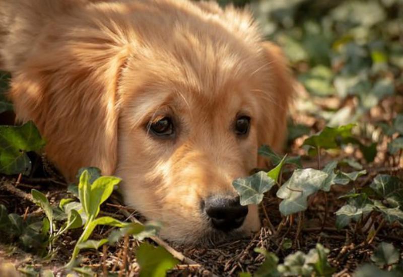Топ самых очаровательных пород собак