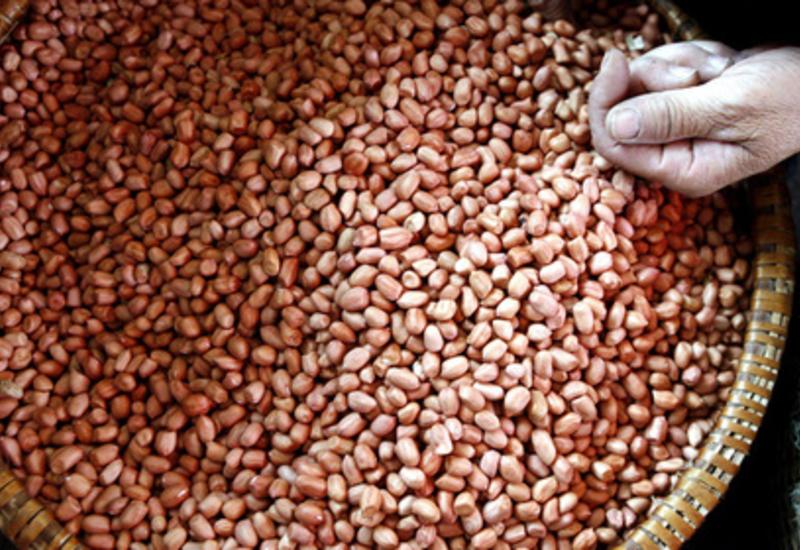 Одобрено первое лекарство от аллергии на арахис