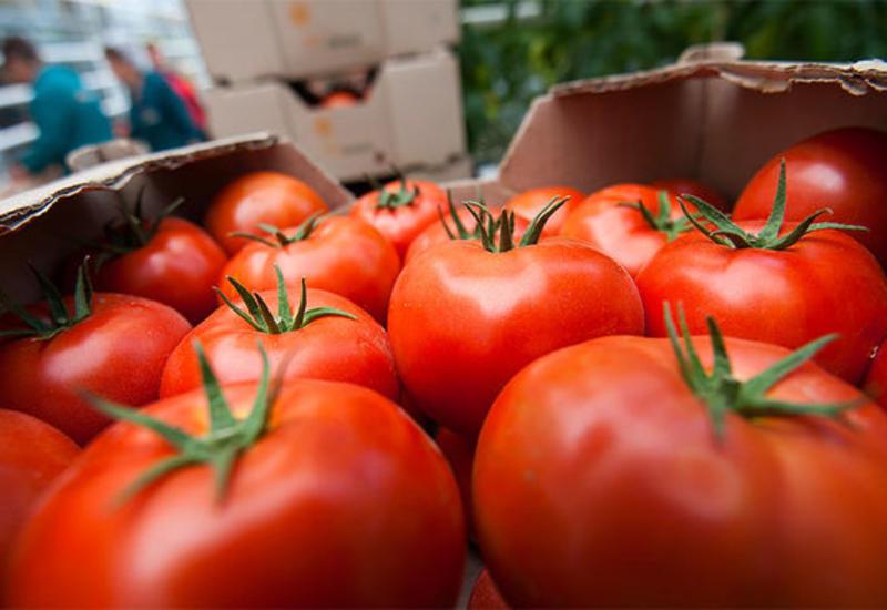 Кардиолог рассказал о вреде помидоров для здоровья