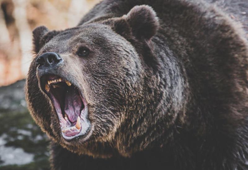 Гражданина Польши в Армении растерзал медведь