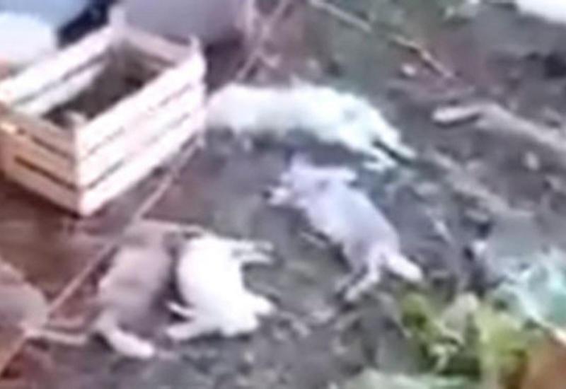 Таинственная «чупакабра» убила десятки кроликов в Башкирии