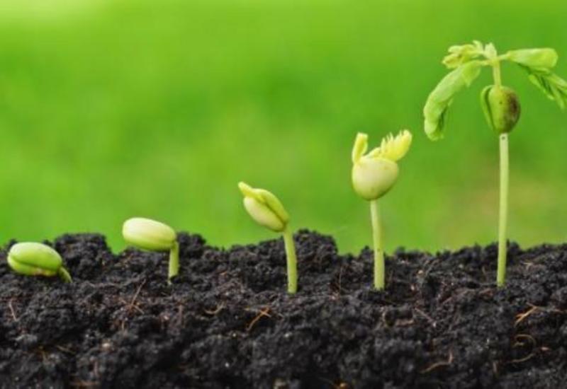 В Азербайджане впервые пройдут ярмарки по продаже семян