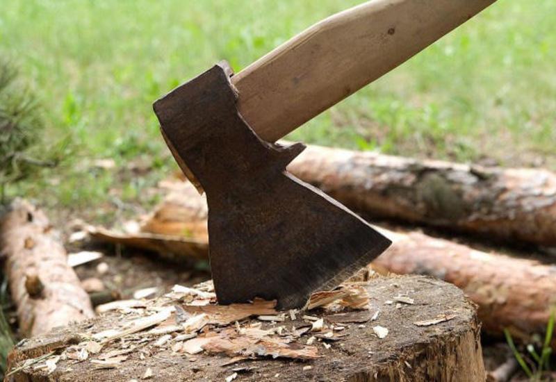 Жителя Баку будут судить за вырубку деревьев