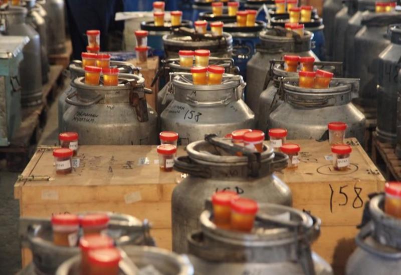 На ярмарку меда в Баку не допустили некачественную продукцию