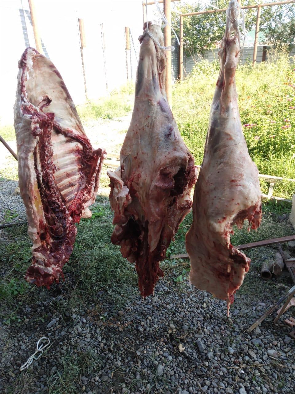 В Мингячевире обнаружили сотни килограмм мертвечины