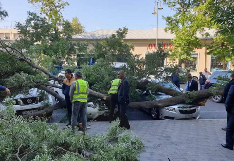 Из-за сильного ветра в Баку пострадали три автомобиля