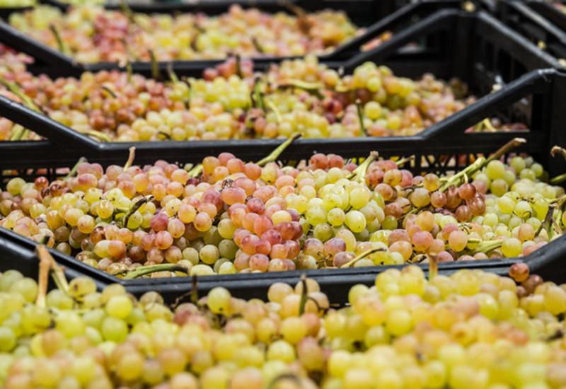 Швейные иглы обнаружены в свежем винограде в Мельбурне