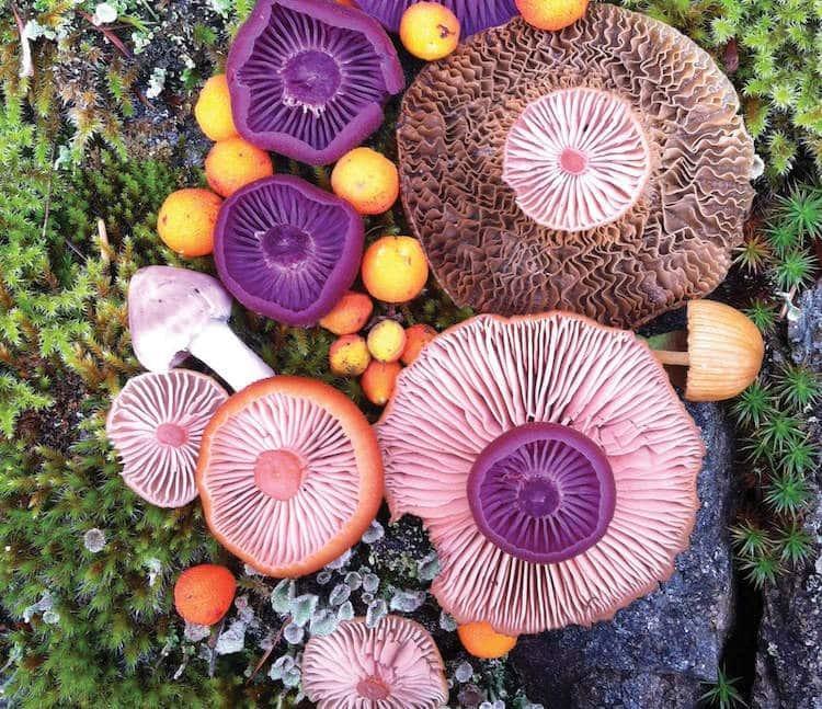 Цветные грибы: фэнтези, созданное самой природой