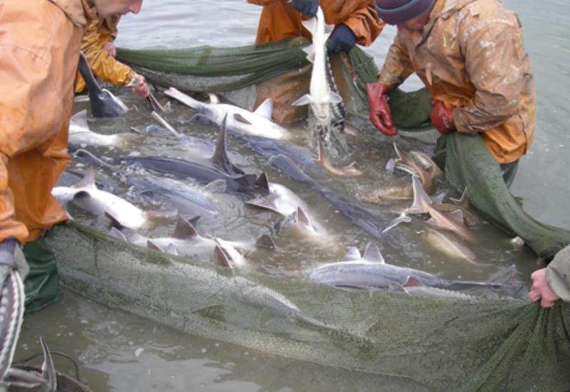 Минэкологии Азербайджана предупредило рыболовов-браконьеров