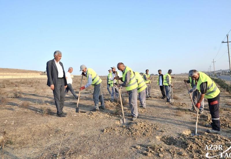 ИВ: Жители Абшеронского района с большим усердием готовятся к инициативе по посадке 650 тыс. деревьев