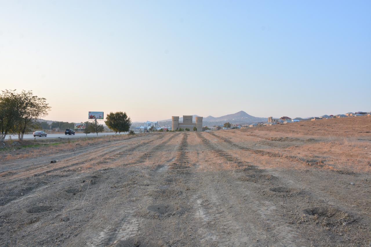 На родине Насими в Шамахы посадят до 50 тыс. деревьев