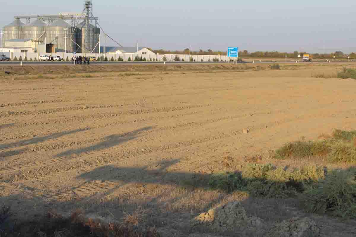 В Сабирабаде посадят 50 тыс. деревьев